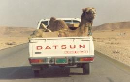 camel_in_truck